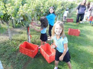 Picking grapes at a magnificent Portuguese winery at someone's birthday party