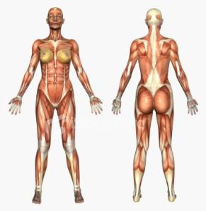`````````````human body